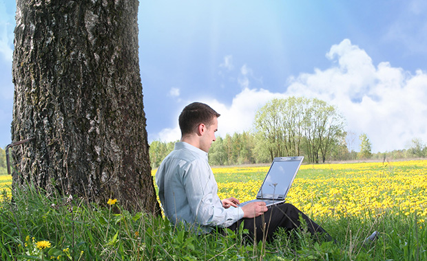 Man sits under tree in field of yellow flowers and reads email on laptop