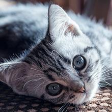 Katzen-KV
