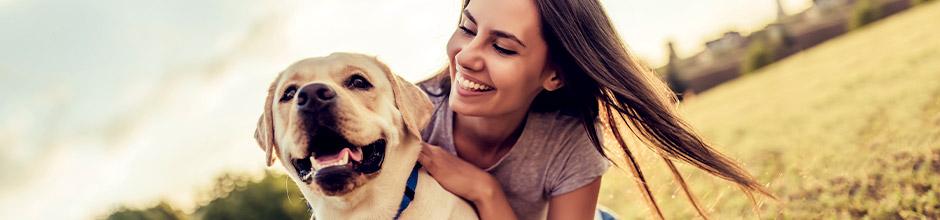 Hunde-Versicherungen