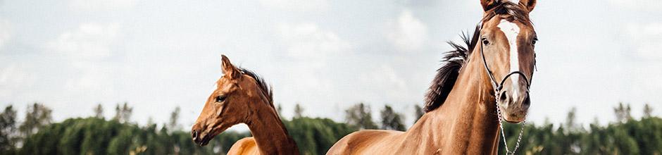 Versicherungen für Ihr Pferd